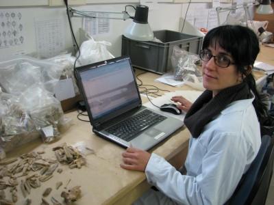 Lídia Colominas al laboratori de l'ICAC estudiant restes òssies d'animals. Foto: Carme Badia.