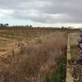 Lectura de tesi: el paisatge cultural de la Plana de València