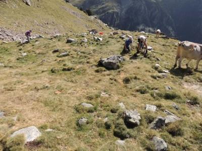 Excavacions al tancat del jaciment de la Coma de Gombrèn.