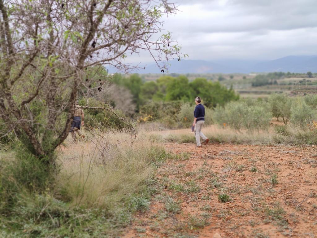 Prospecció arqueològica a peu, al terme de Vallmoll (Alt Camp). Foto © ICAC
