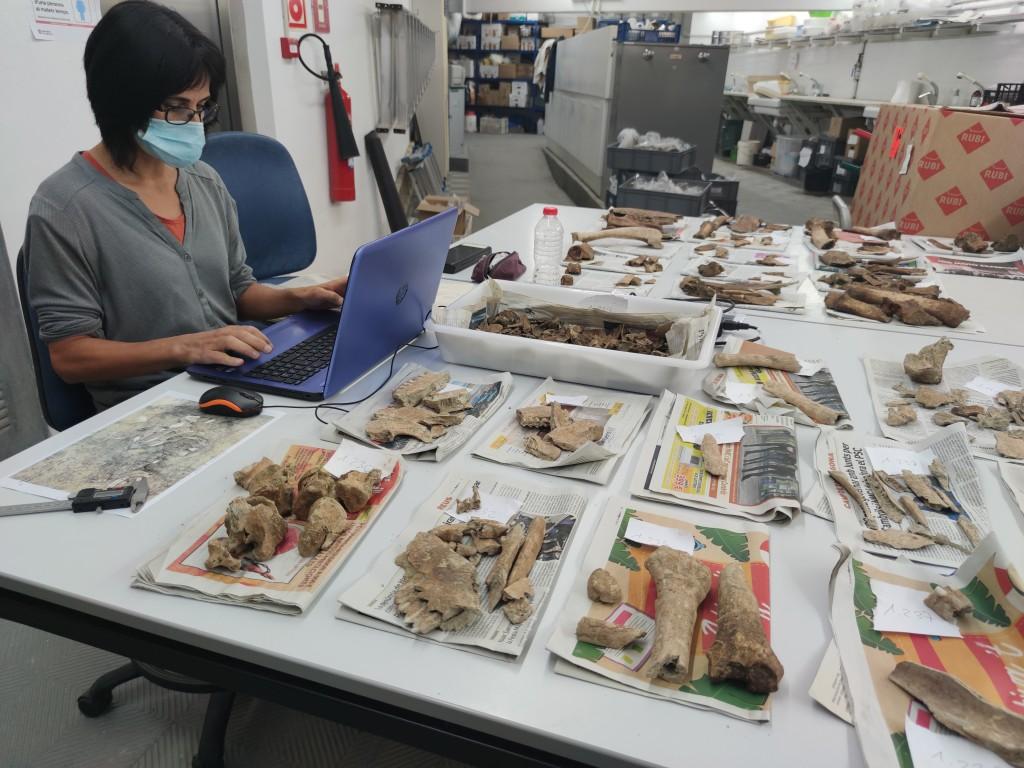 La Dra. Lídia Colominas treballant amb una mostra de fauna a l'ICAC (2020). Foto: ICAC.